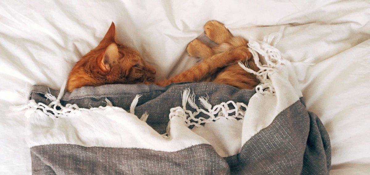 matratzenhaus schlafberatung